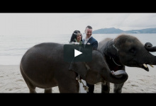 Wedding in Thailand with elephants, dinner and fire show. Chantelle & Dean