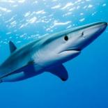 На одном из пляжей под Римом замечена акула.  Все посты за 04 мая 2015.